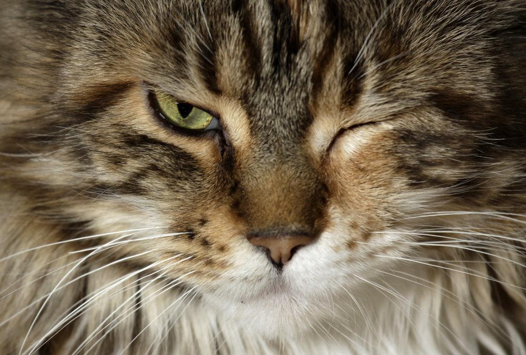 Katze zwinkert