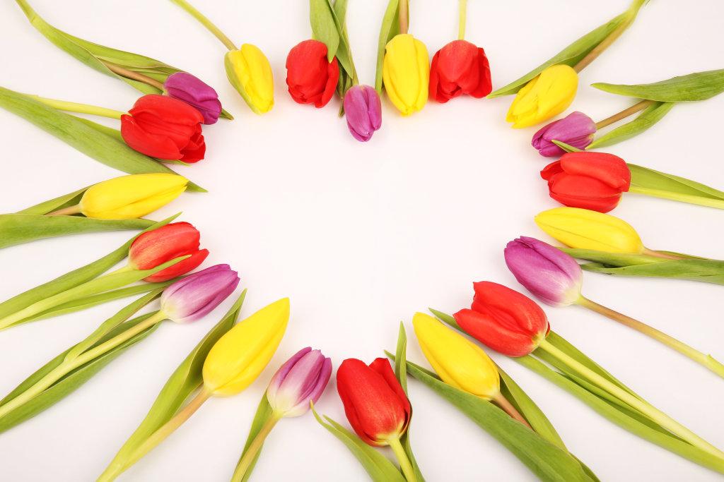 Herz aus Tulpen