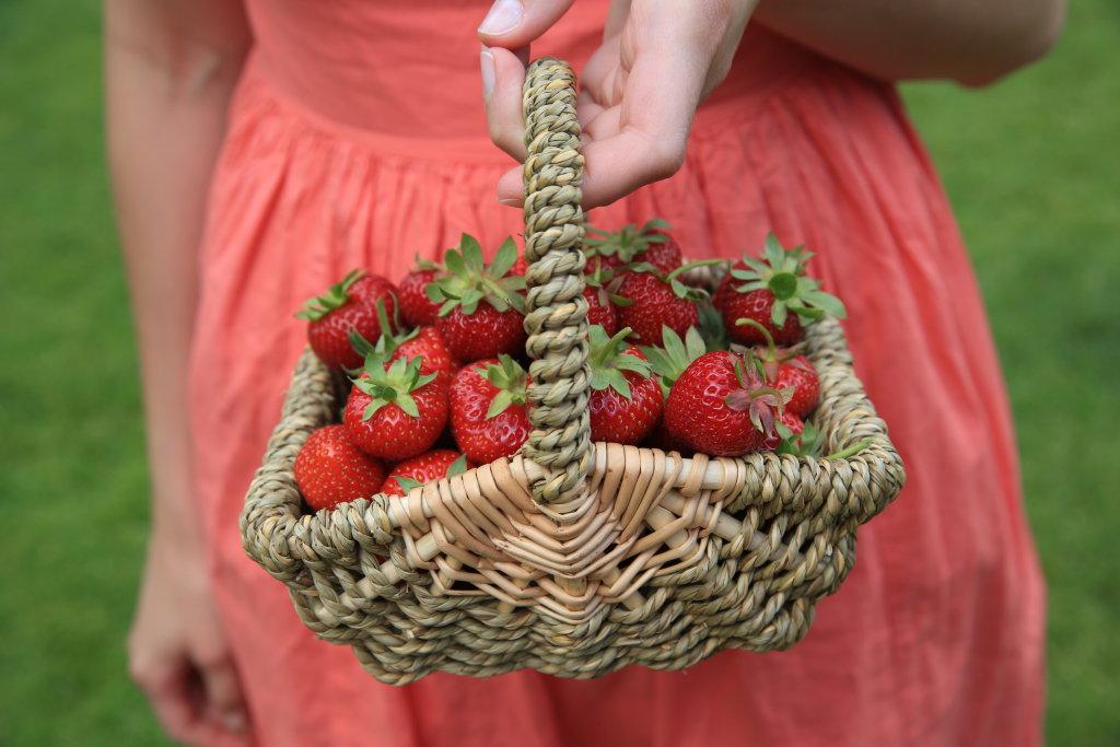 Erdbeeren pflücken