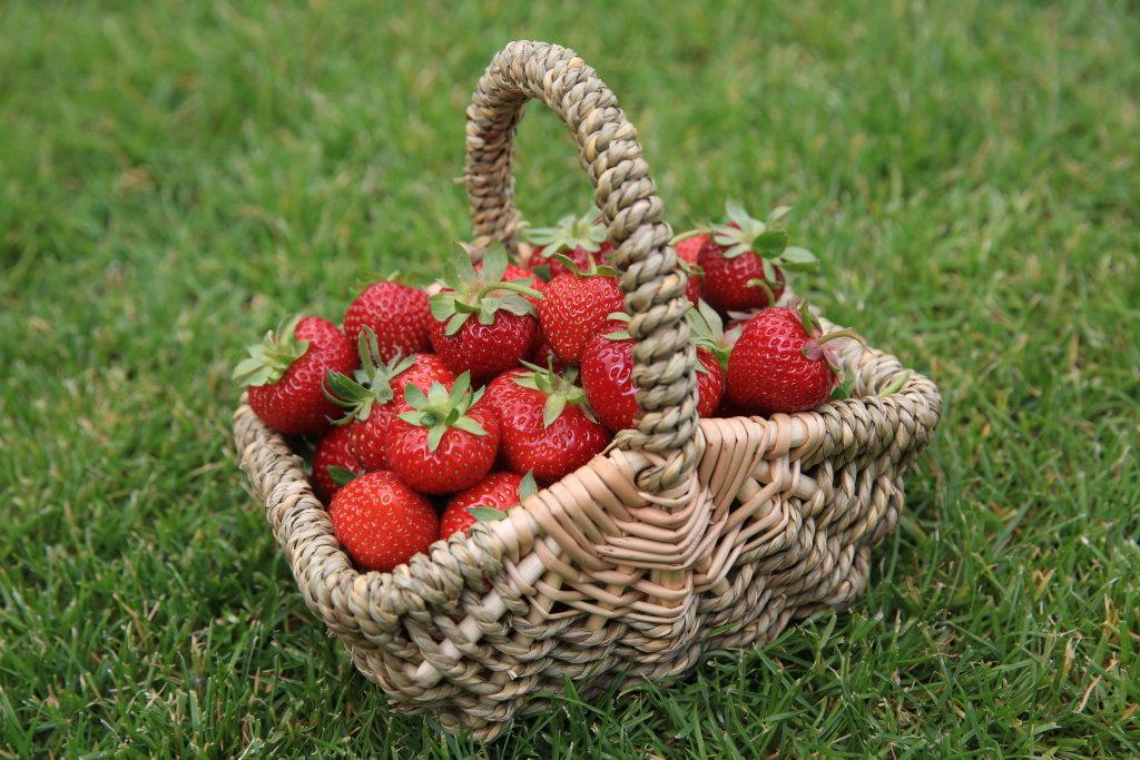 Erdbeeren im Körbchen