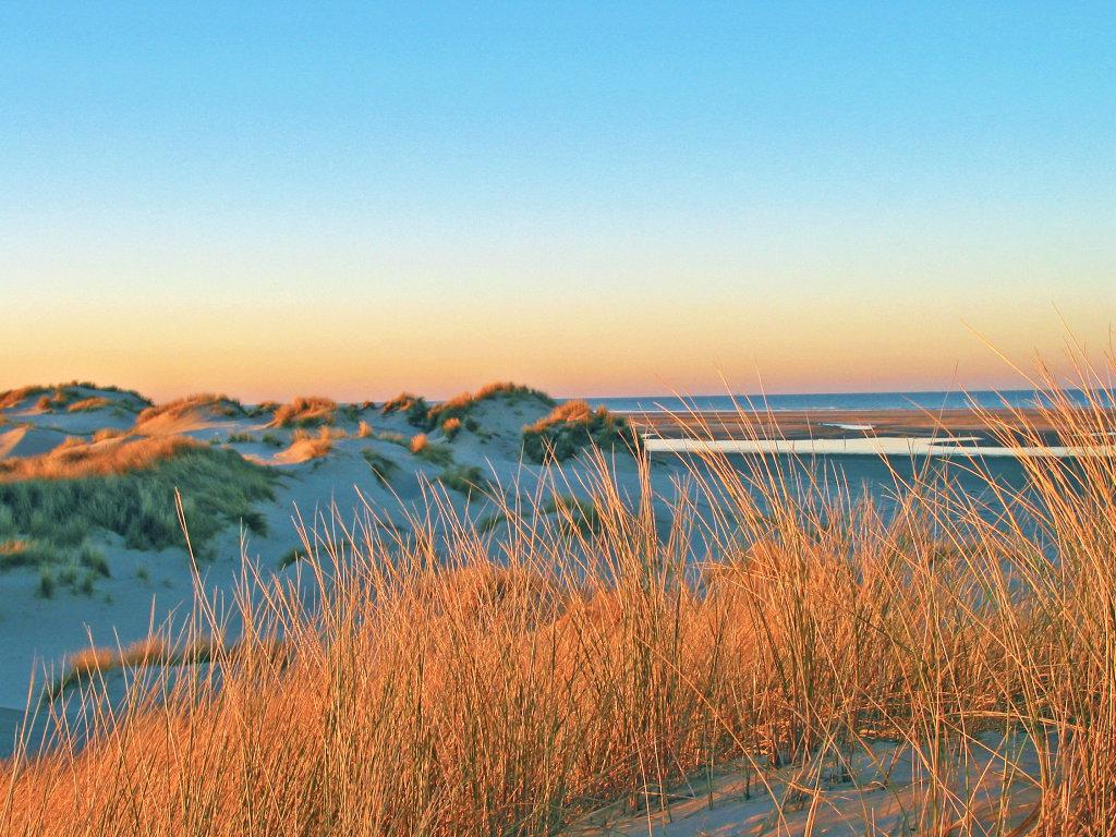 Dünen Nordsee Strandhafer
