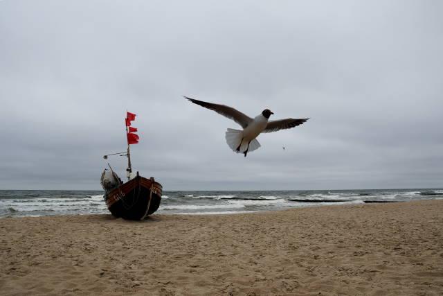 Möwe und Schiff auf Usedom