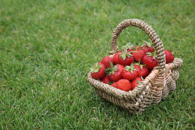 Erdbeer-Körbchen