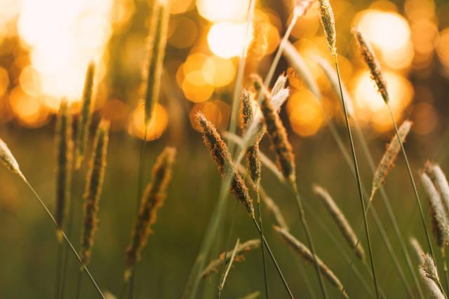 In der Abendsonne