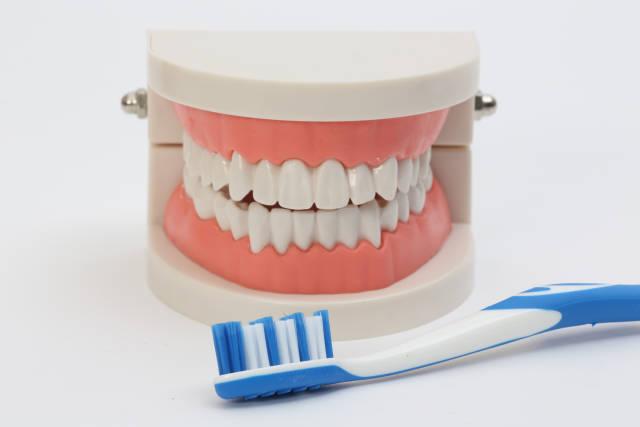 Gebiss und Zahnbürste