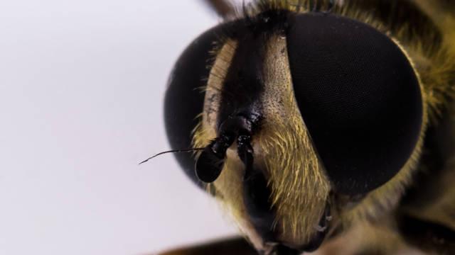 Bienen im Focus