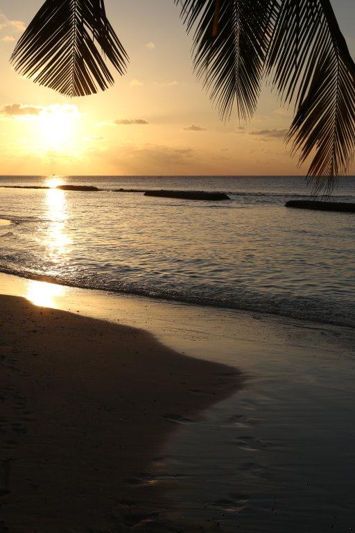 Sonne unter Palmen