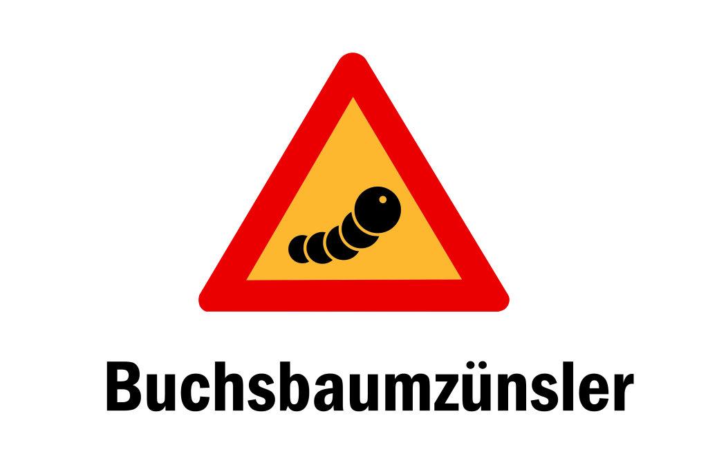 Buchsbaumzünsler
