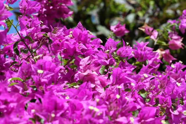 Pinke Pflanzen