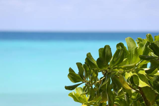 Pflanze am Strand