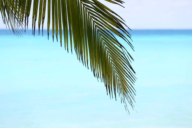 Palme am Meer