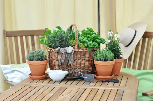 Kräuter auf Gartentisch