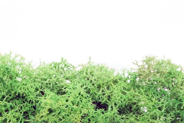 Moos grün