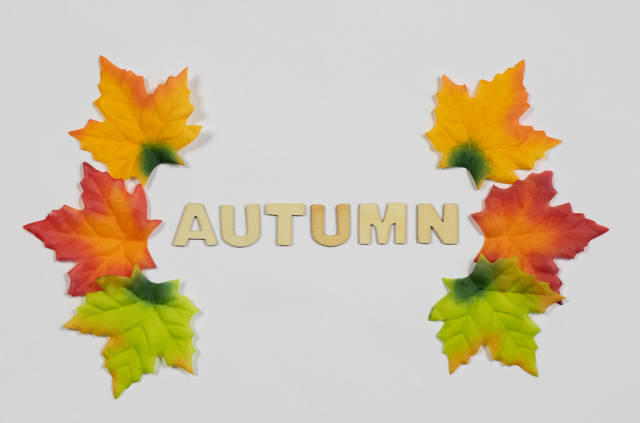 Fall leaves with word autumn