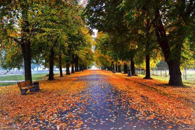 Lindenallee: Bäume im Herbst