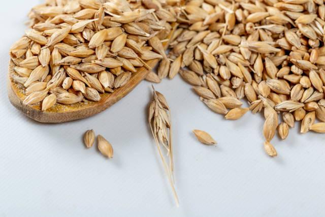 Oats grain, raw ears on a white background