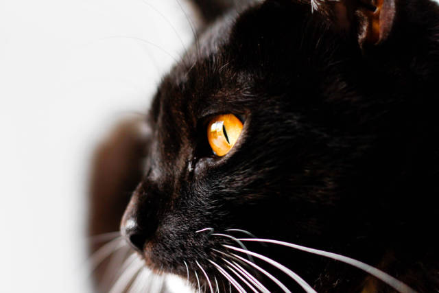 black cat with amber eyes