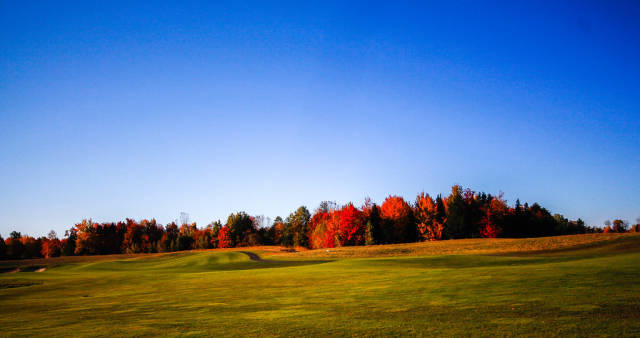 Fall Landscape  with Trees