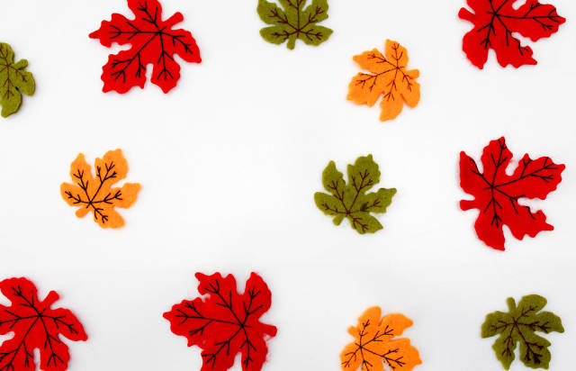 Red, Yellow and Green Maple Leaf