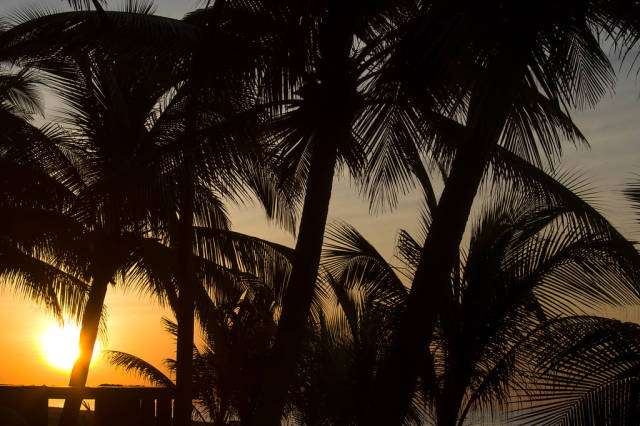 Morning light behind palm trees