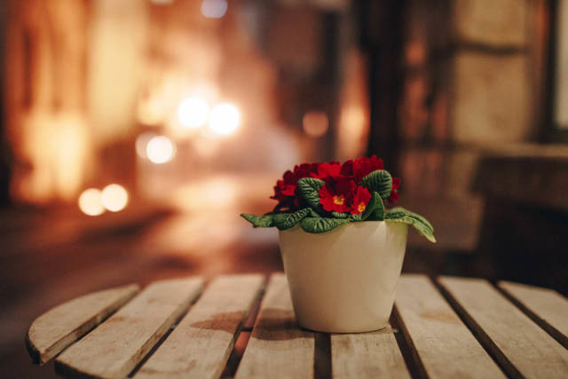 Close up of pot with flowers on a blurry background. Night time