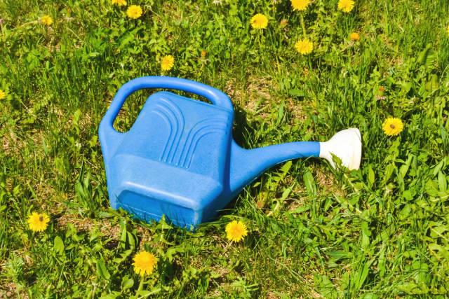 Blaue Gießkanne auf dem Rasen