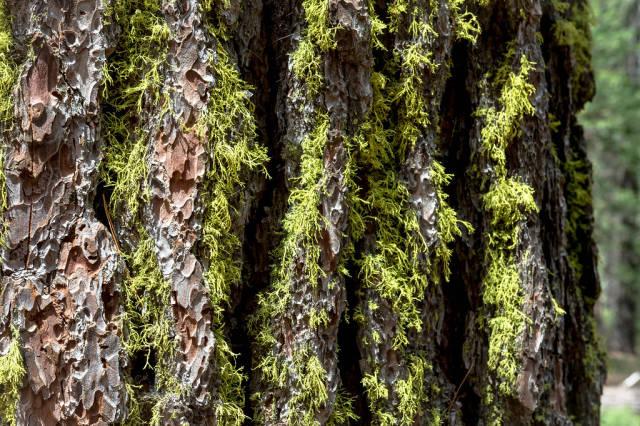 Green moss on tree bark