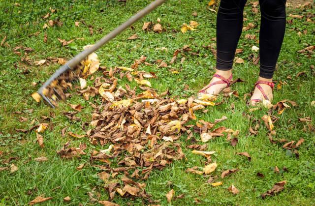 Young woman raking leaves
