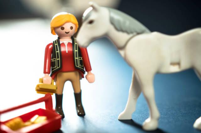 Rider preparing to brush her horse