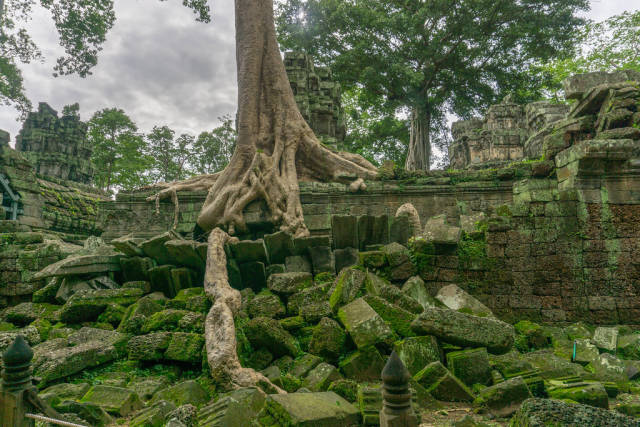 Ta Phrom Temple Ruin in Angkor Thom Complex in Siem Reap