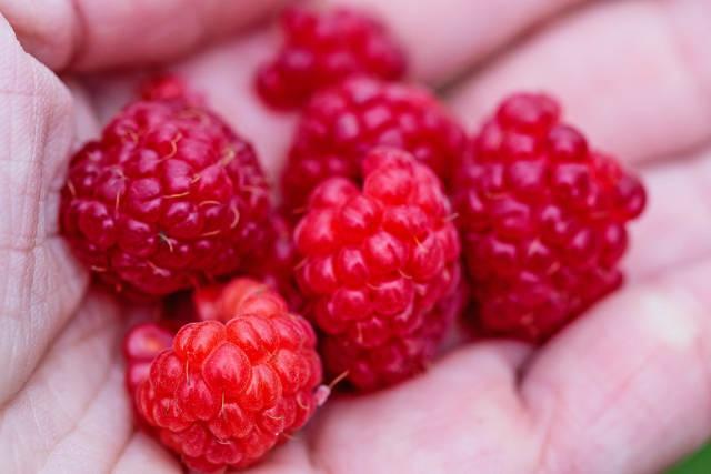 raspberry ripe in hand