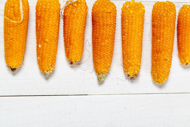 Small heads of corn