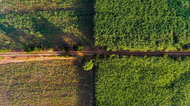 Aerial quadrant shot of sugarcane fields in Hinigaran