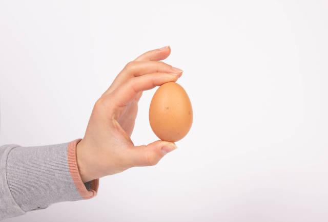 Hand holding chicken egg