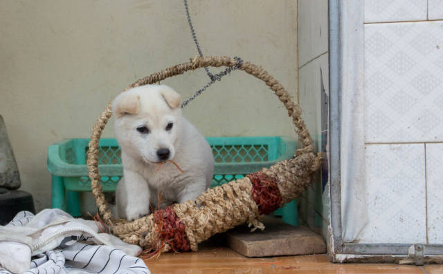 Little white puppy in a Basket