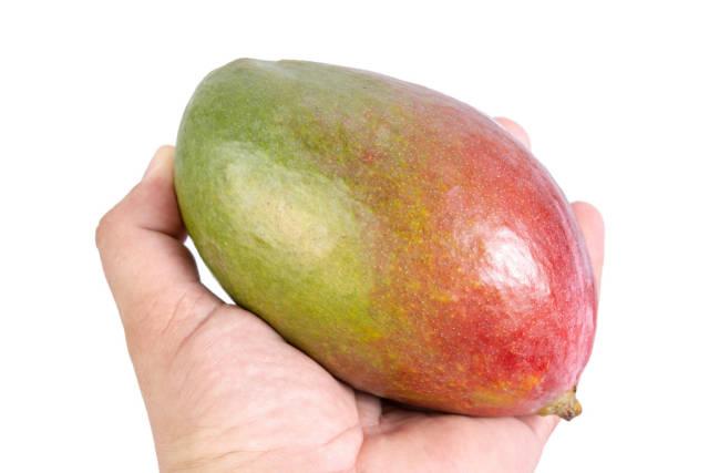 Fresh healthy Mango fruit in the hand