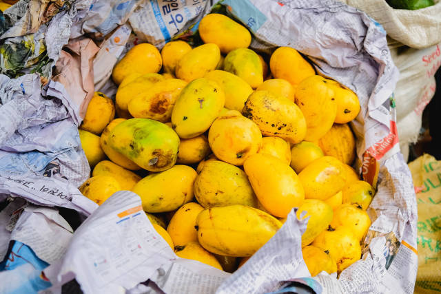 Ripe mangoes wrapped in newspaper