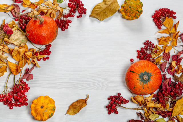 Autumn frame with colorful leaves, pumpkin and viburnum berries on a white wooden background
