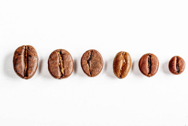 Different grains of coffee on a white background
