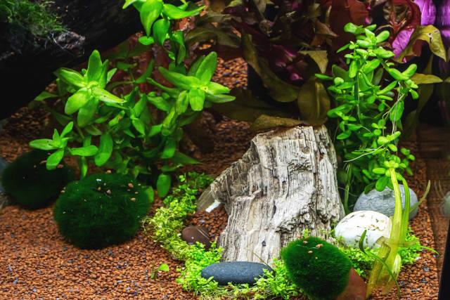 Aquarium with algae, rocks and snags