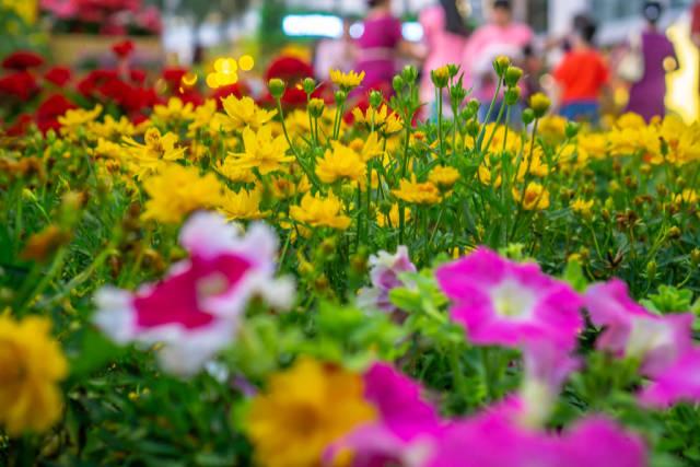 Bokeh of Flowers in Ho Chi Minh City, Vietnam