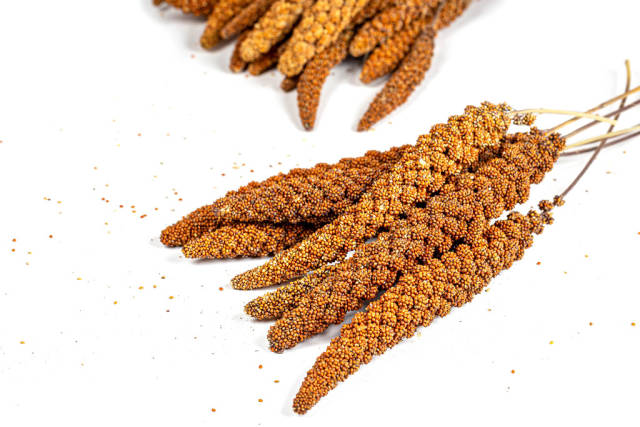 Harvest red millet on white background
