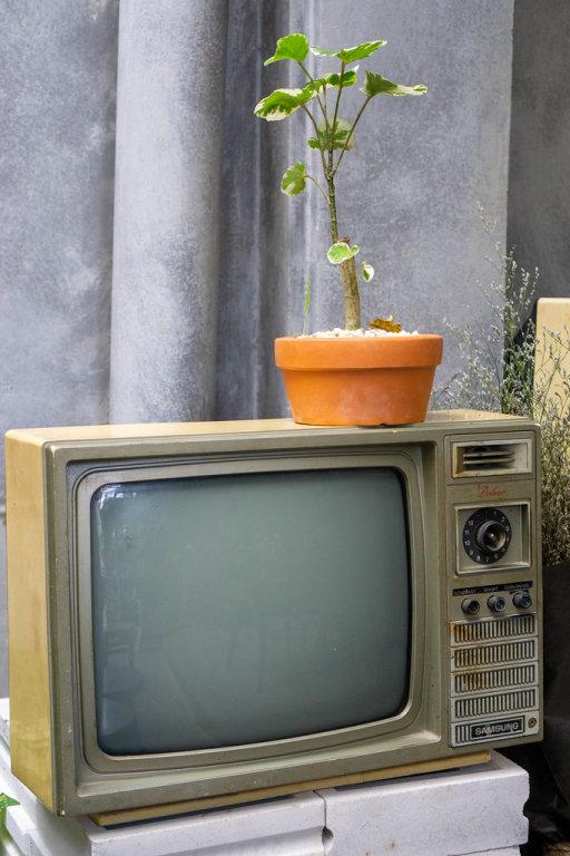 Retro Röhrenfernseher mit Zimmerpflanzen als Dekoration in einem Cafe