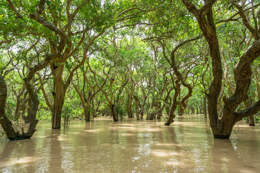 Rowing through a Floating Forest near Siem Reap