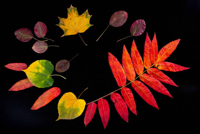 Frame of colorful autumn leaves on a black background