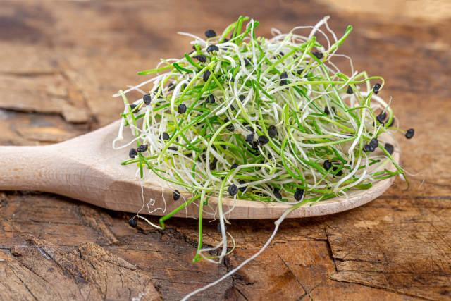 Gesundes Essen: Zwiebelsprossen auf einem Kochlöffel im hölzernen Hintergrund