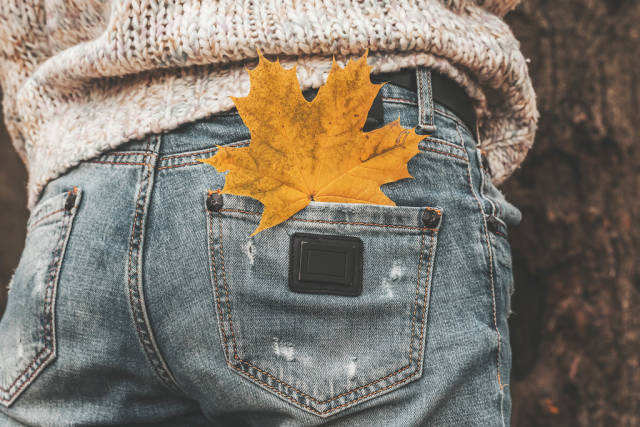 Autumnal nature atmosphere. Close up, maple leaf in the back pocket of jeans