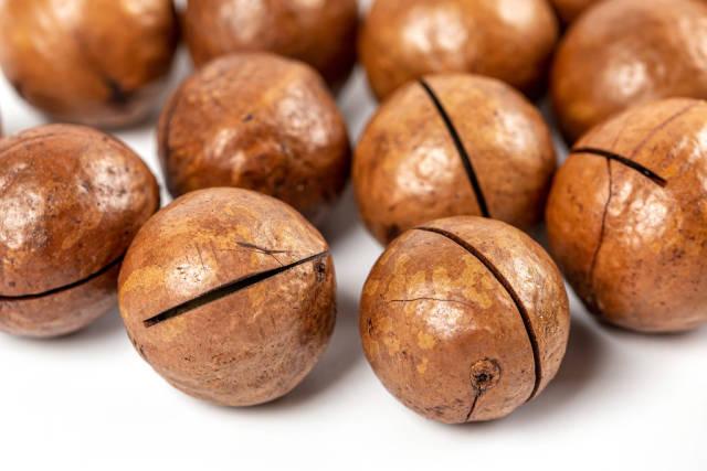 Ripe macadamia nuts close up