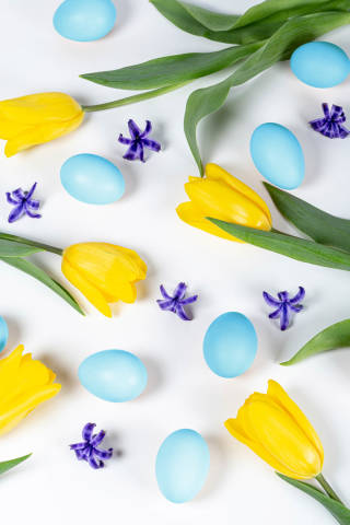 Easter background with blue eggs, yellow tulips and hyacinth flowers
