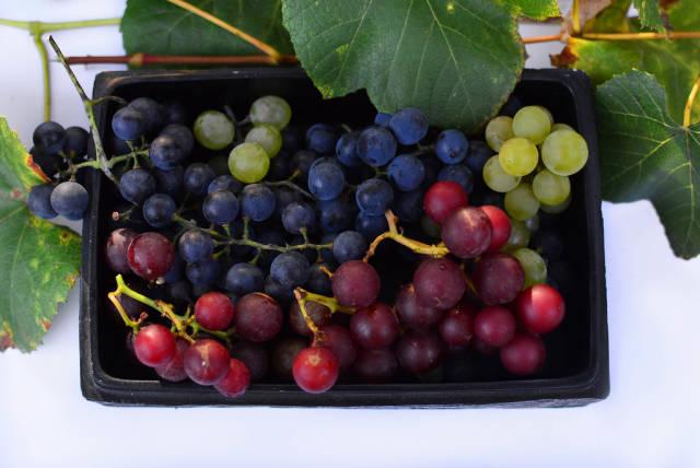 Weintrauben mit Stiel und Blättern in einer schwarzen Schüssel